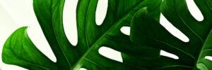 Hojas de plantas
